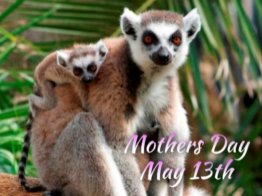 Treat mum on her special day to breakfast at the Zoo plus early zoo entry!
